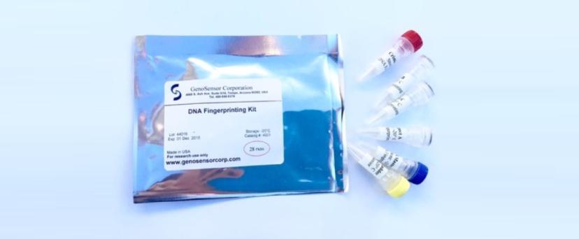 DNA Fingerprinting